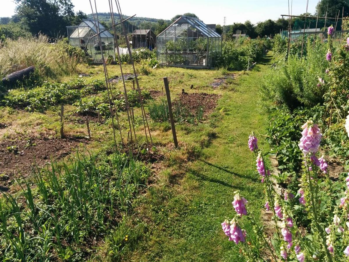 Pangbourne Allotments in Summer