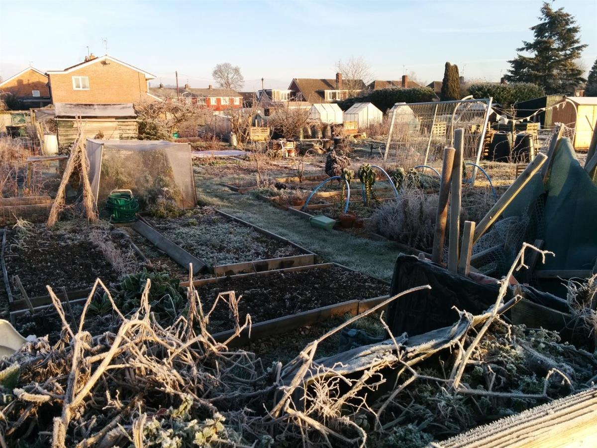 Pangbourne Allotments in Winter